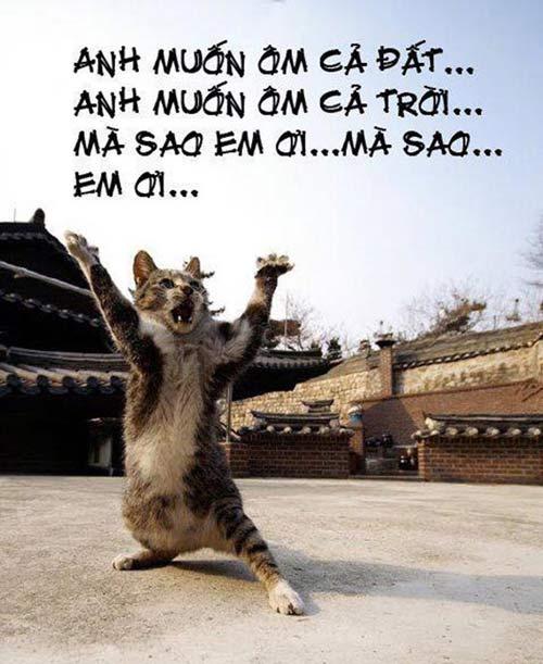 anh dong vat hai: xem & cuoi dau ruot - 11