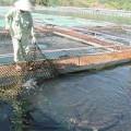 Tin tức - Bộ Công an chỉ rõ buôn lậu cá tầm có bảo kê
