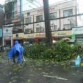 Tin tức - Cây đổ, dân cạy cửa taxi cứu người