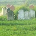 Tin tức - Kinh hoàng rau trồng trên mộ, tưới bằng nước thải