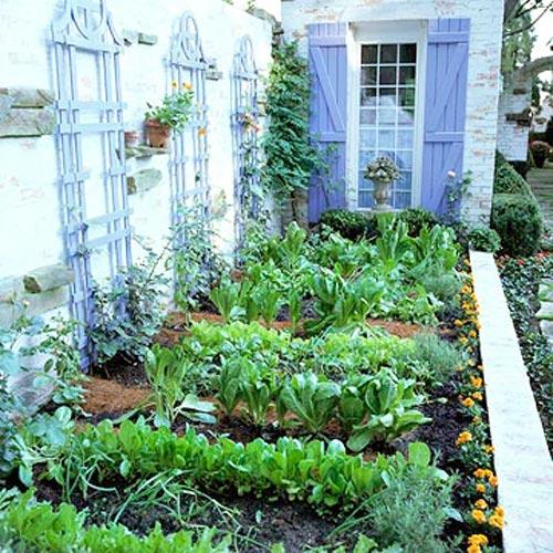Tập trồng rau tại nhà như chuyên gia (P1) | trong rau | Nha