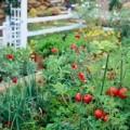 Nhà đẹp - Tập trồng rau tại nhà như chuyên gia (P1)