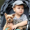 Làng sao - Nhóc Flynn thích thú chơi cùng chú cún cưng