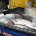 Mua sắm - Giá cả - Chữ Trung Quốc gắn trên 700kg cá trắm lậu