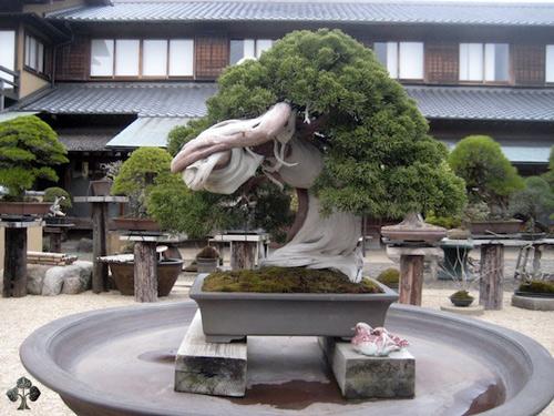 chiem nguong mau bonsai dep nhat the gioi - 1