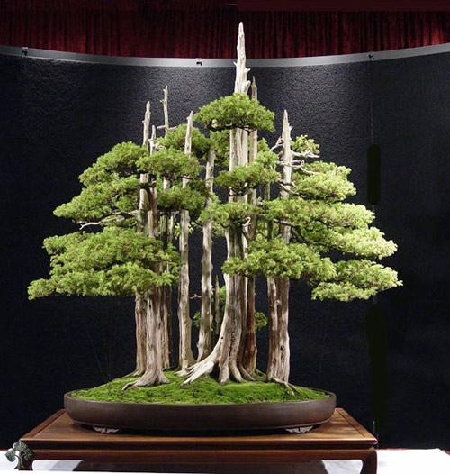 chiem nguong mau bonsai dep nhat the gioi - 2