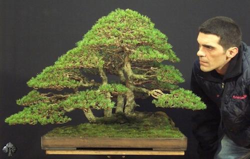 chiem nguong mau bonsai dep nhat the gioi - 4