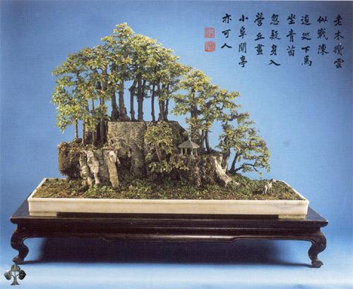 chiem nguong mau bonsai dep nhat the gioi - 5