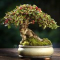 Nhà đẹp - Chiêm ngưỡng mẫu bonsai đẹp nhất thế giới