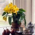 Nhà đẹp - Tuyệt chiêu chăm sóc phong lan đẹp mỹ miều