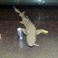 Tin tức - Kỳ lạ cá mập xuất hiện trên tàu điện ngầm Mỹ