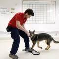 Sức khỏe - Nhờ chó phát hiện sớm… ung thư buồng trứng