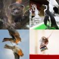 Tin tức - Ảnh động vật tuần qua: Chuột trượt ván điêu luyện