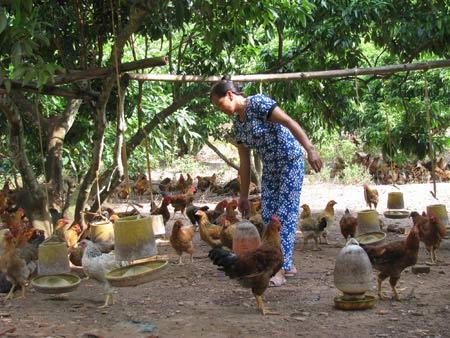 ga yen the: chi dao khong lam nen thuong hieu - 1