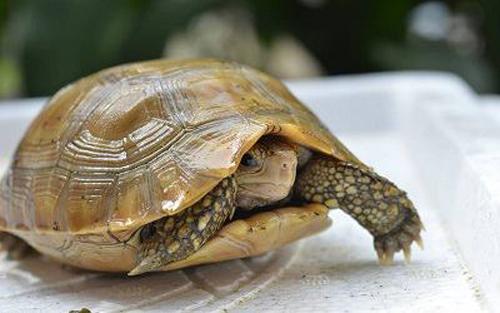 Bày Rùa kích thích tài lộc, may mắn - 1