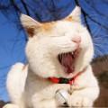 Làm đẹp - Học cách làm đẹp từ loài mèo