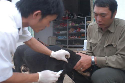 nhieu tinh cho dai tan cong nguoi hang loat - 1