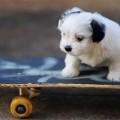Sành điệu như thú trượt ván