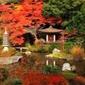 Nhà đẹp - Thu về theo sắc lá phong đỏ Nhật Bản