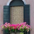 Nhà đẹp - 5 loại cây cảnh ban công bảo vệ ngôi nhà