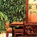 Nhà đẹp - Vườn đứng len lỏi vào nhà Việt