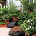 Nhà đẹp - Chọn cây cảnh hợp nhà, hợp người