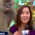 Clip Eva - Phì cười xem khỉ làm bậy