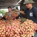 Tin tức - Bác tin vải thiều TQ nhập ngược vào Việt Nam