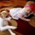 Clip Eva - 'Sốt' video chó dạy em bé tập bò