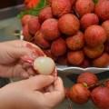 Sức khỏe - Khỏe hơn nhờ trái vải