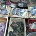 Mua sắm - Giá cả - Hải sản giá rẻ: Vừa ăn vừa… run