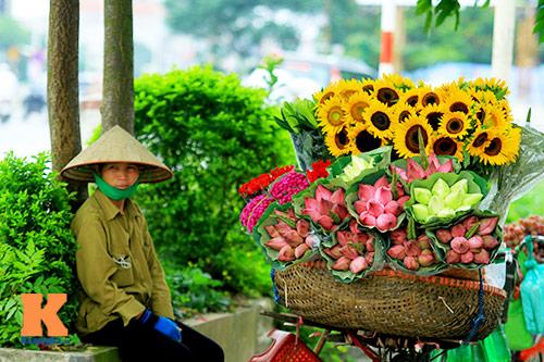 hoa huong duong khoe sac ruc ro giua ha noi - 15