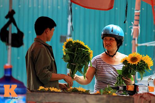 hoa huong duong khoe sac ruc ro giua ha noi - 14