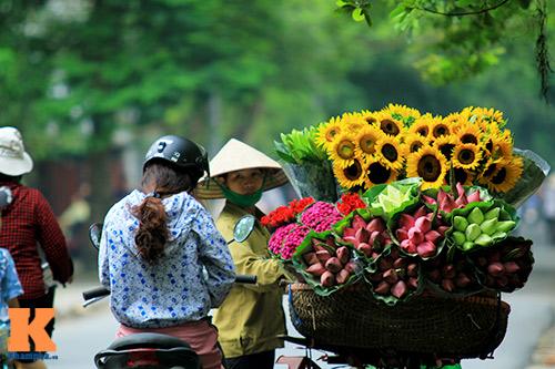hoa huong duong khoe sac ruc ro giua ha noi - 12