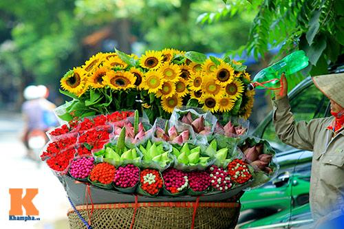 hoa huong duong khoe sac ruc ro giua ha noi - 9