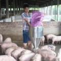 Mua sắm - Giá cả - Bỏ nghiệp thủy thủ về làm triệu phú nuôi lợn