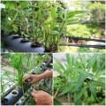 Nhà đẹp - Đủ rau ăn hàng ngày nhờ vườn ban công 2m2