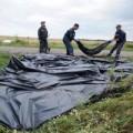 Tin tức - Vụ MH17: Mẹ cầu xin Putin trả lại thi thể con
