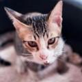 Sức khỏe - Phân mèo chữa được bệnh ung thư