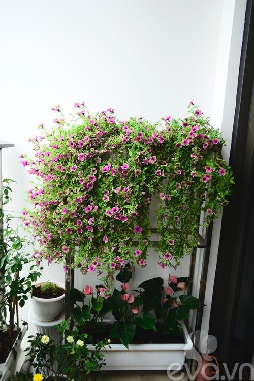 tham vuon hoa ban cong tuyet dep o cau giay - 7