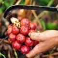 Mua sắm - Giá cả - Những trái cây, hạt rừng hút khách thủ đô