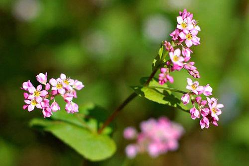 lim di truoc nhung con duong hoa o viet nam - 1