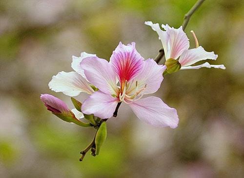 lim di truoc nhung con duong hoa o viet nam - 10