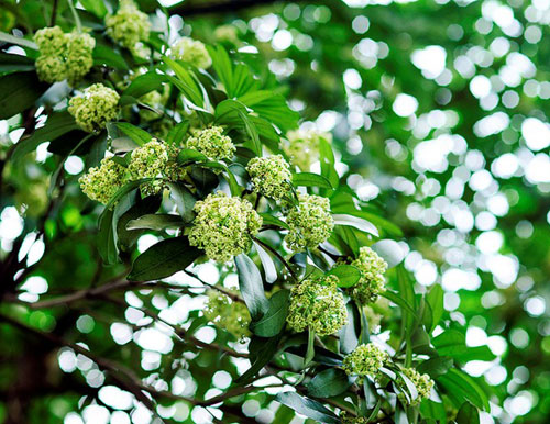 lim di truoc nhung con duong hoa o viet nam - 12
