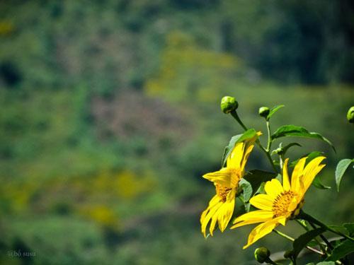 lim di truoc nhung con duong hoa o viet nam - 16