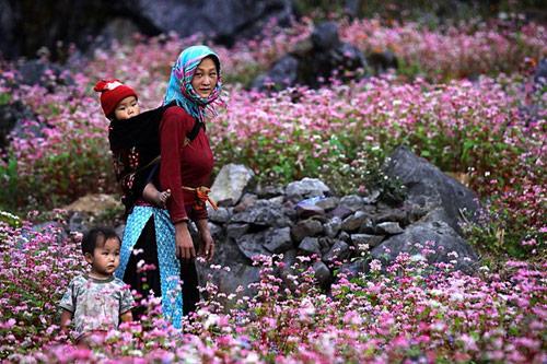lim di truoc nhung con duong hoa o viet nam - 3