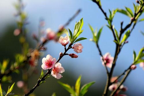 lim di truoc nhung con duong hoa o viet nam - 7