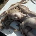 """Tin tức - Sự thật bất ngờ về """"xác nàng tiên cá"""" trên bãi biển"""