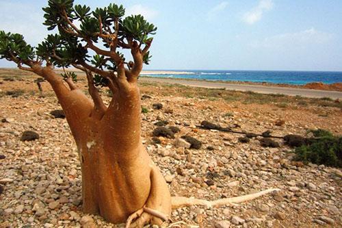 Quần đảo có vẻ đẹp siêu thực nhất thế giới - 4