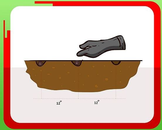 5 buoc trong bap cai: kho thanh de - 3